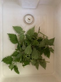 Nettle Soup Sonja Shah-Williams Ayurvedic Medicine Practitioner Ayurveda London